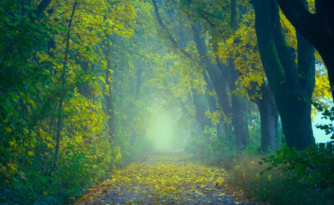 BONUS Track – A Brief Mindful Self-Compassion Practice